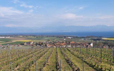 Visites du Domaine La Colombe et du Château Le Rosey – avril 2021